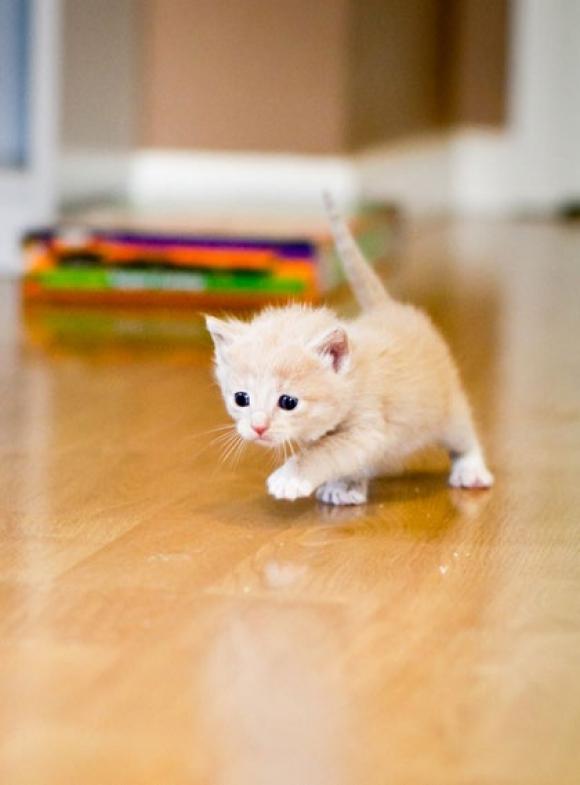 Kitten6.