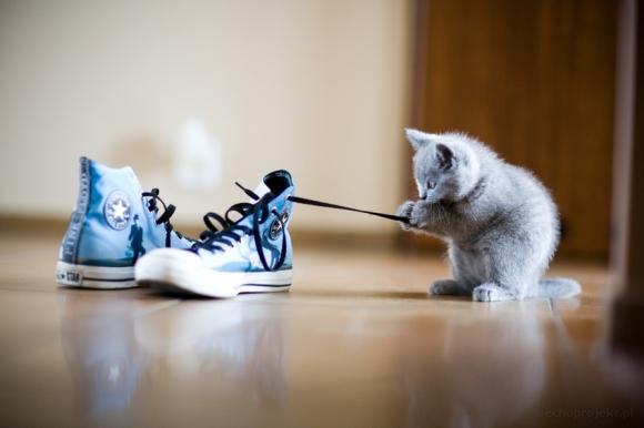 Kitten9.