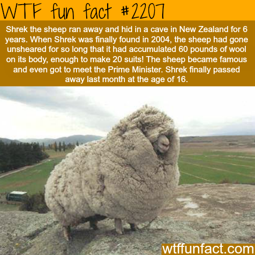 funny-fact10