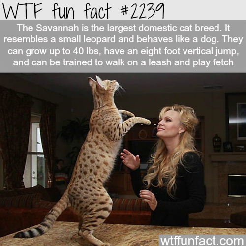 funny-fact4