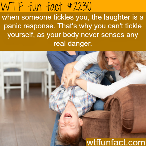 funny-fact6