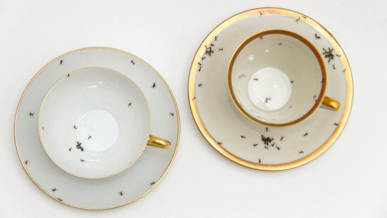 porcelain-ants2